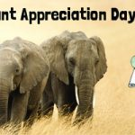 Happy Elephant Appreciation Day!