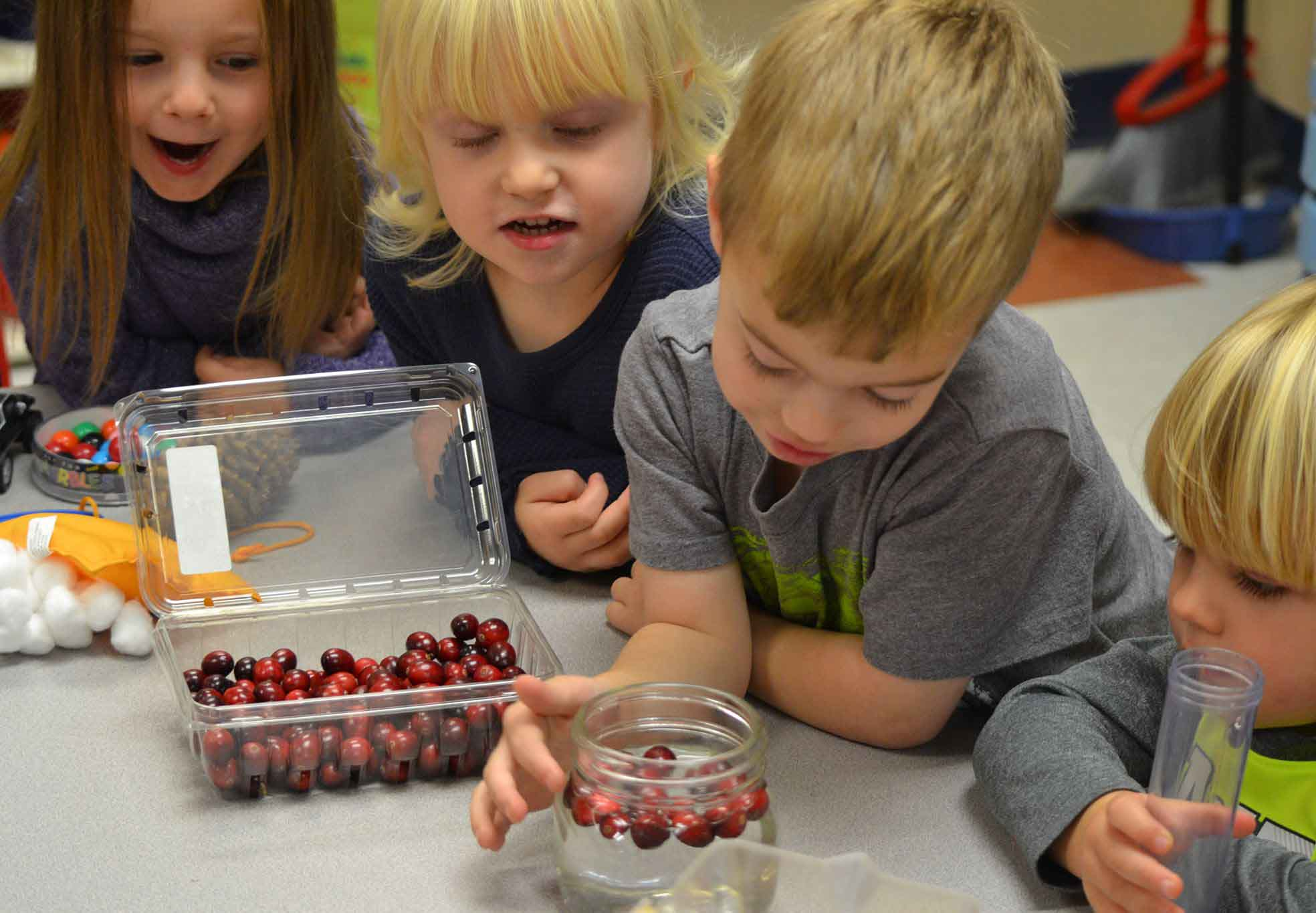 Learning about Cranberries!